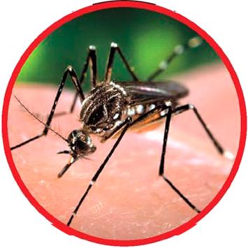 dengue3
