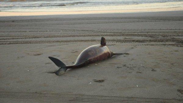 Noticias_chivilcoy_2marzo delfines