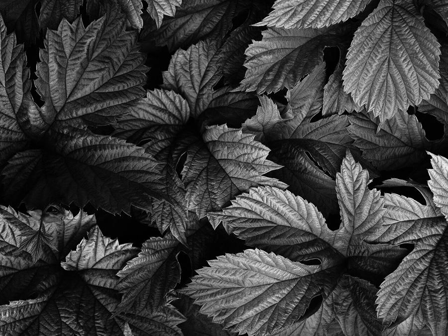 hojas 6 a byn